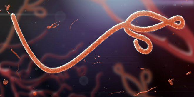 Bolas de azúcar de fullerenos contra el virus del Ébola